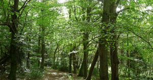 sustainable timber and forestry